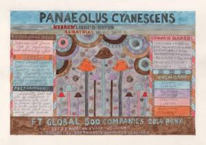 PanaeolusCyanescens